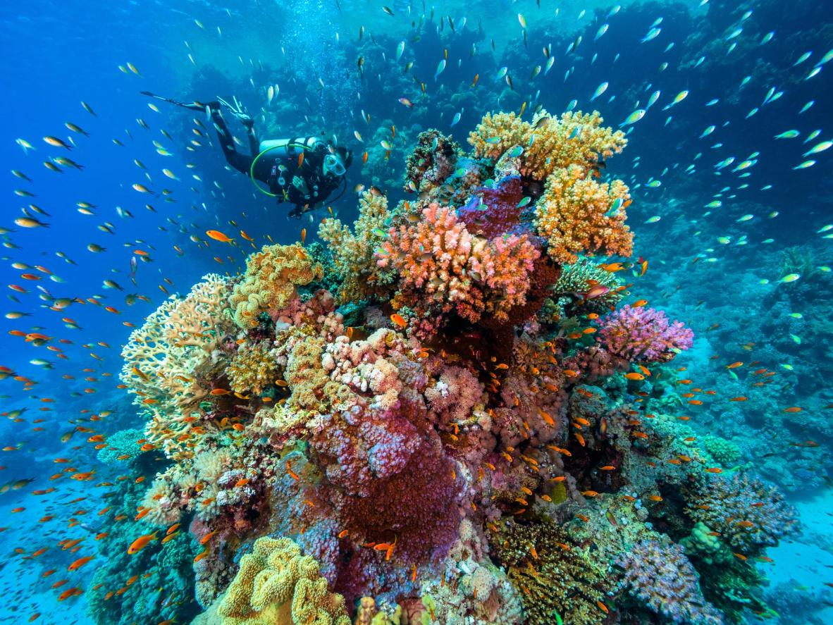 Calm waters and coral reefs