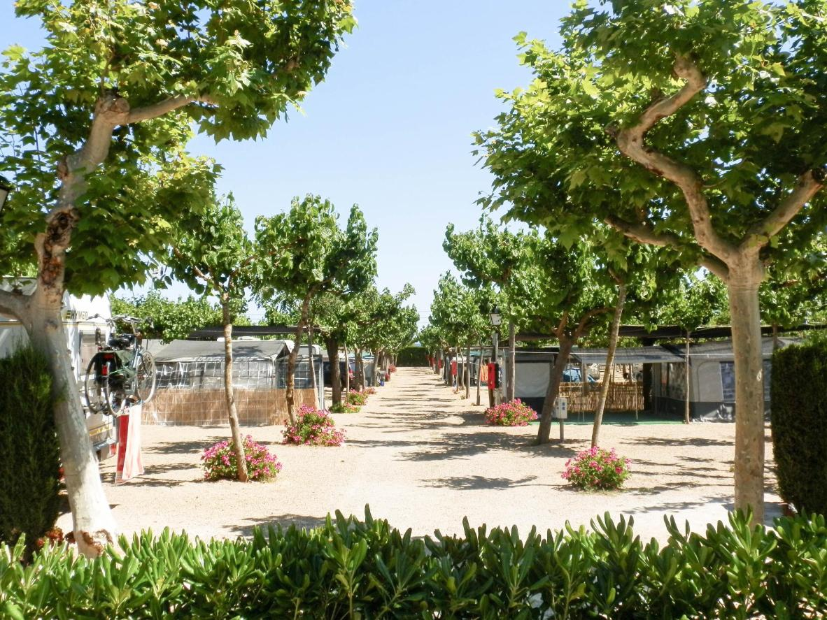 Tree-lined avenues and flowerbeds provide privacy for RVs and camping trailers at Camping Clará