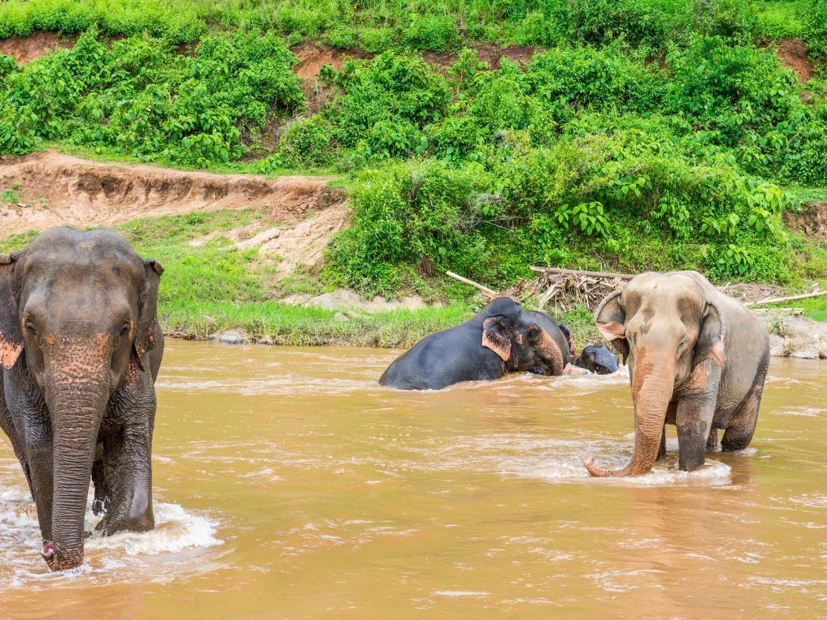 In Chiang Mais Elephant Nature Park können Sie auf Elefanten reiten