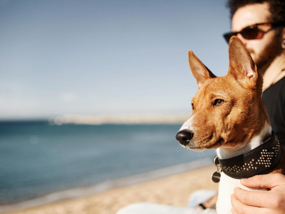 Disfruta junto al mar con tu mascota en Barcelona