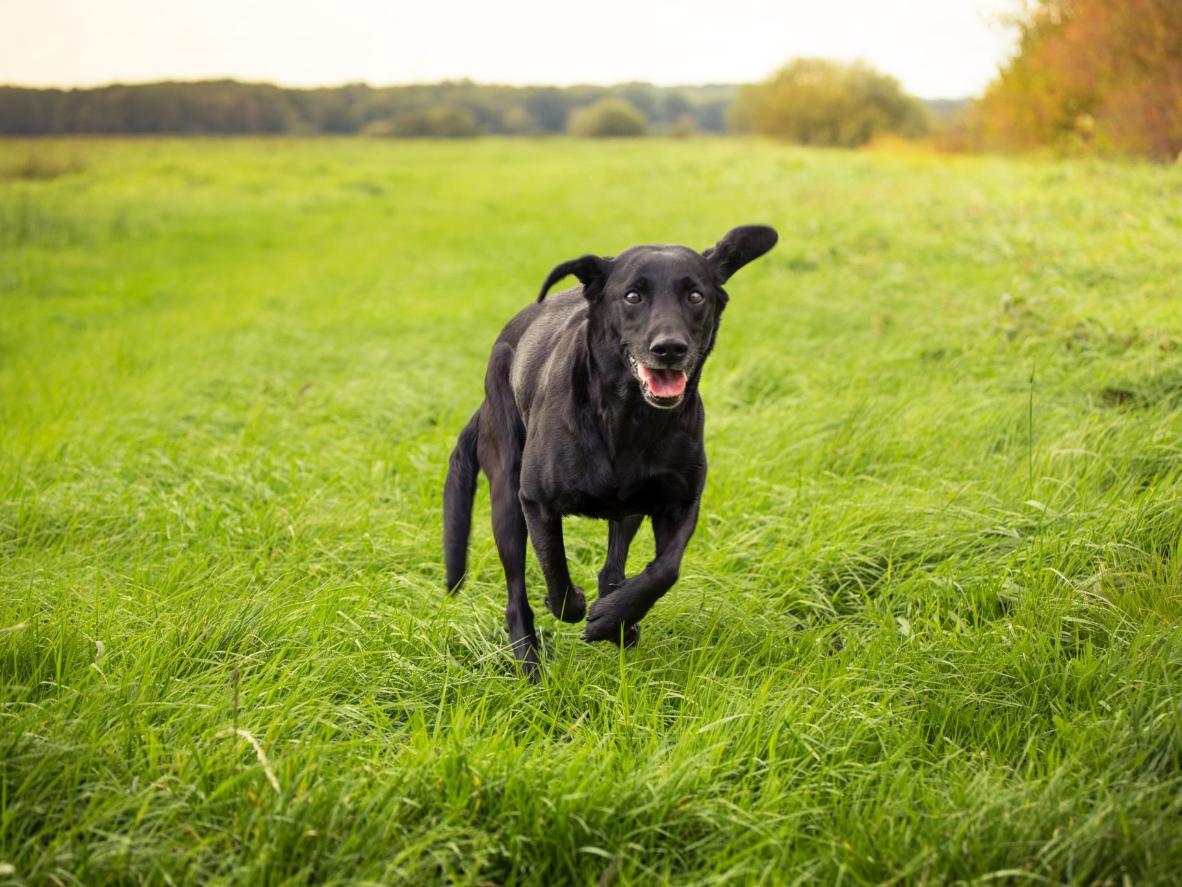 Hay muchas rutas para caminar cerca, así que vaya a explorar, solo usted y su mascota