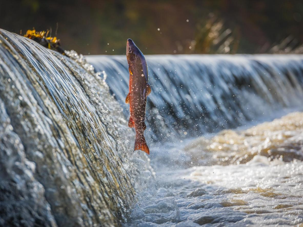 In the autumn, you'll also catch sight of salmon 'jumping' upstream