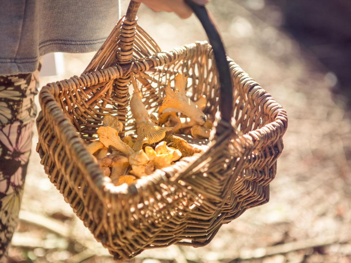 Take a foraging tour of the Black Forest, near Baiersbronn
