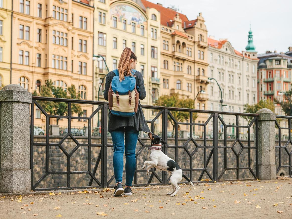 Für Einwohner in Prag liegt es im Trend, Hunden englische Namen zu geben