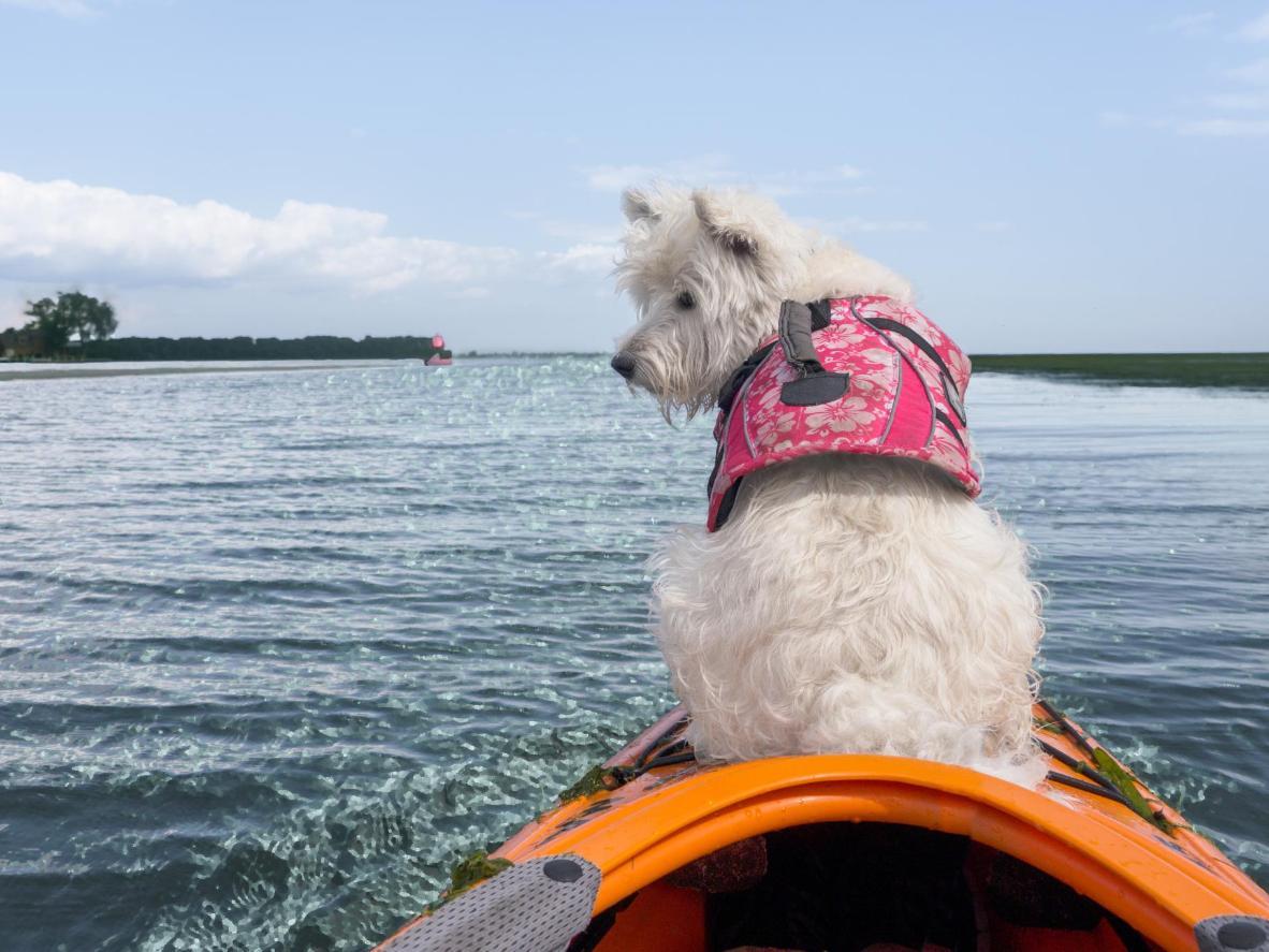 フロリダでは、他の犬連れの旅行者とカヤッキングに繰り出そう