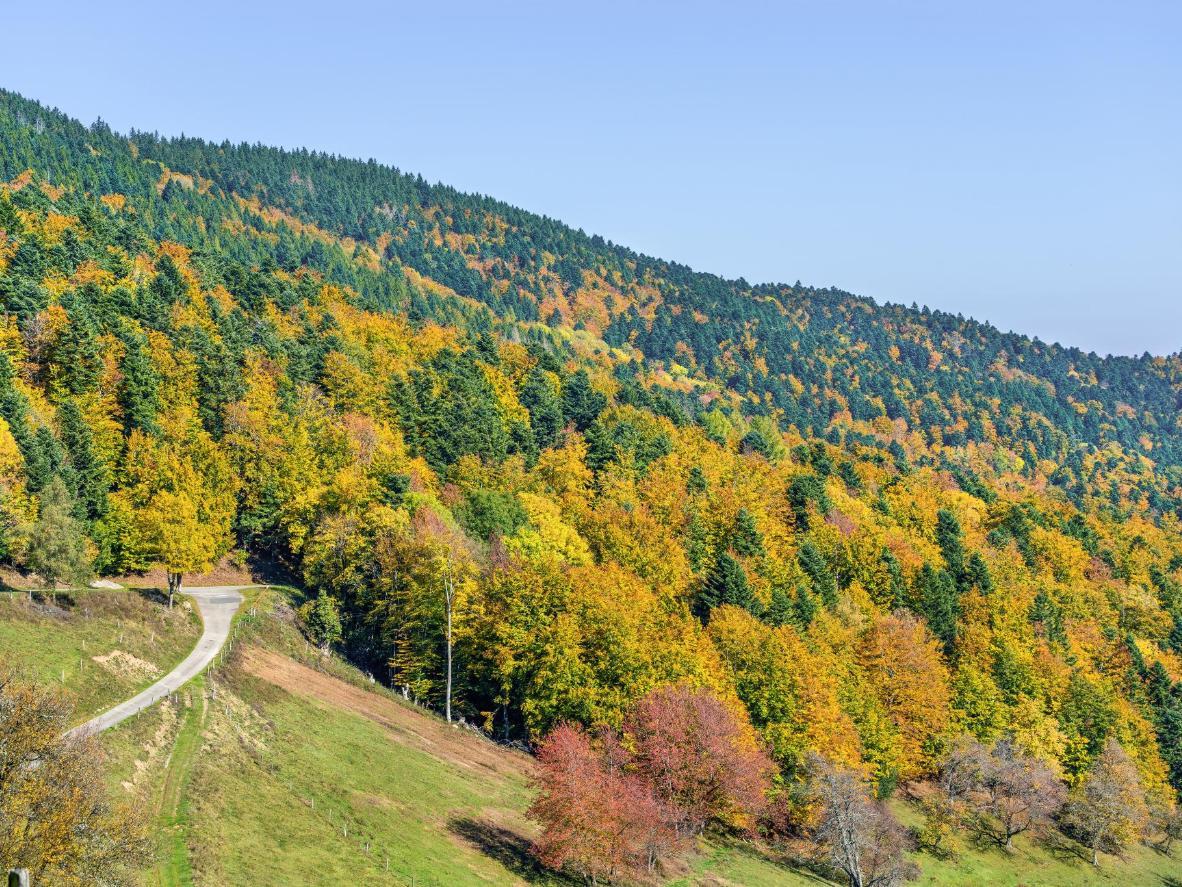 Orbey es una ciudad dentro de la región bucólica de Alsacia, conocida por sus colinas, viñedos y valles.