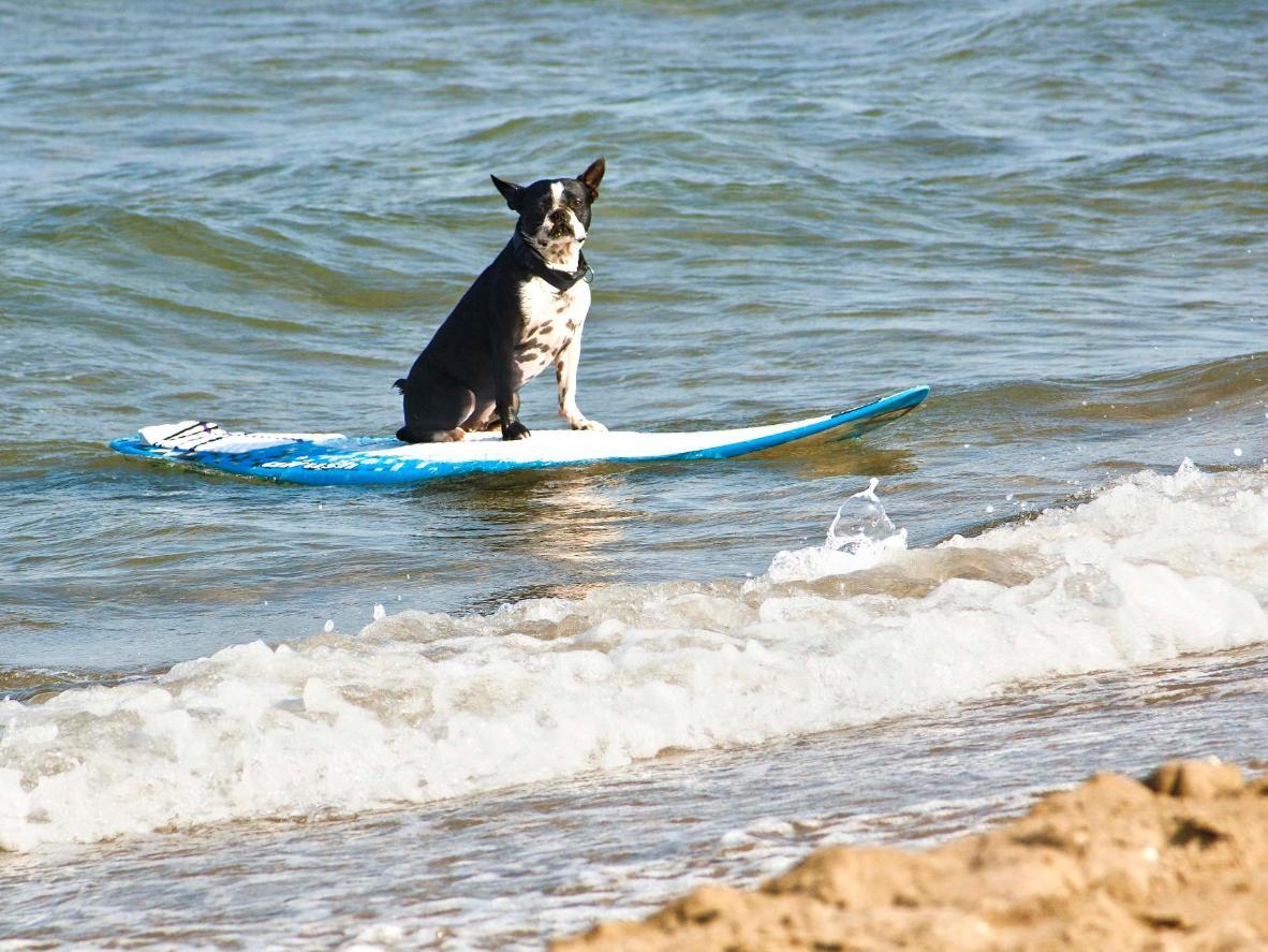 La salvaje costa gallega gusta también a los perros, que podrán disfrutarla en Punta Corveira