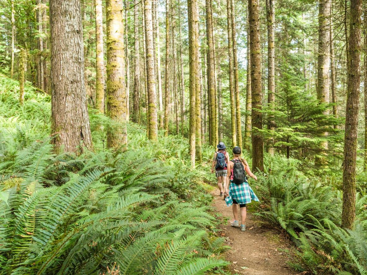 Explore old-growth, Sitka spruce forest on the wildly romantic Vancouver Island