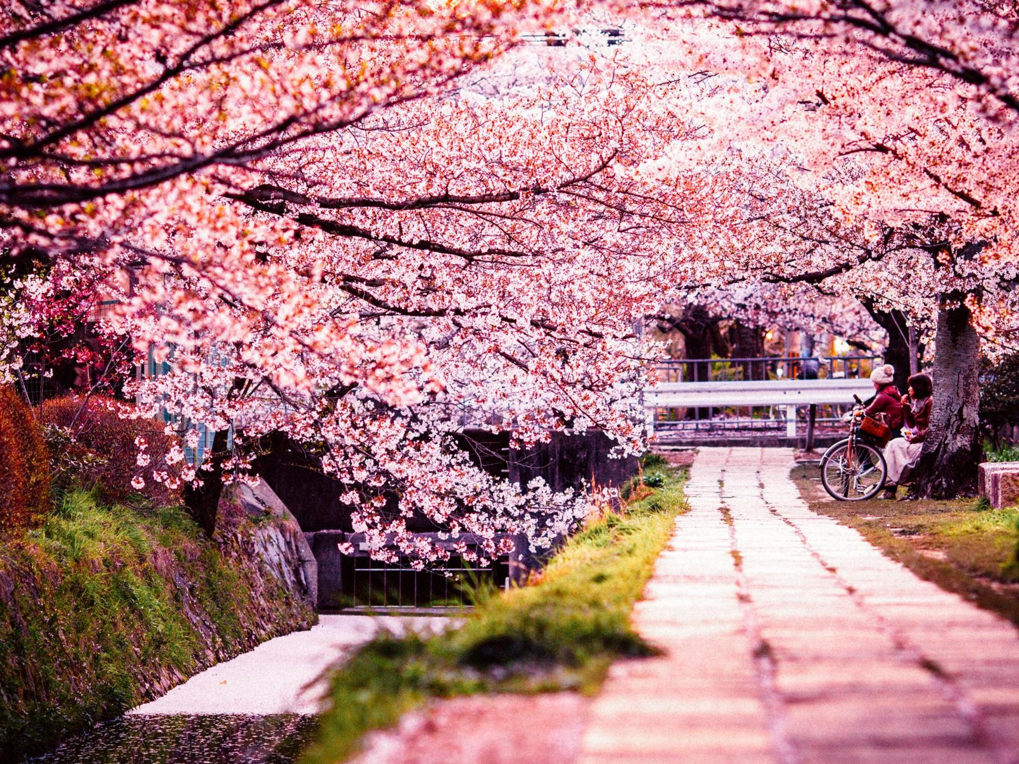 The Top 7 Places In Japan To See Cherry Blossom