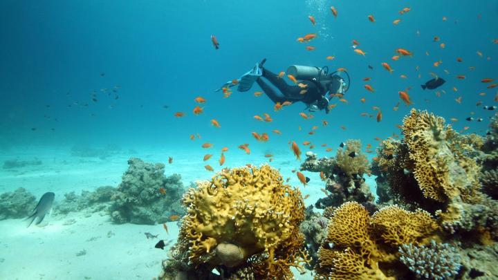 Encuentra el mejor lugar para el buceo en Sharm El-Sheikh