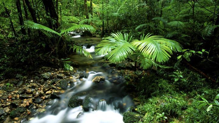 Encuentra el mejor lugar para la selva en Port Douglas