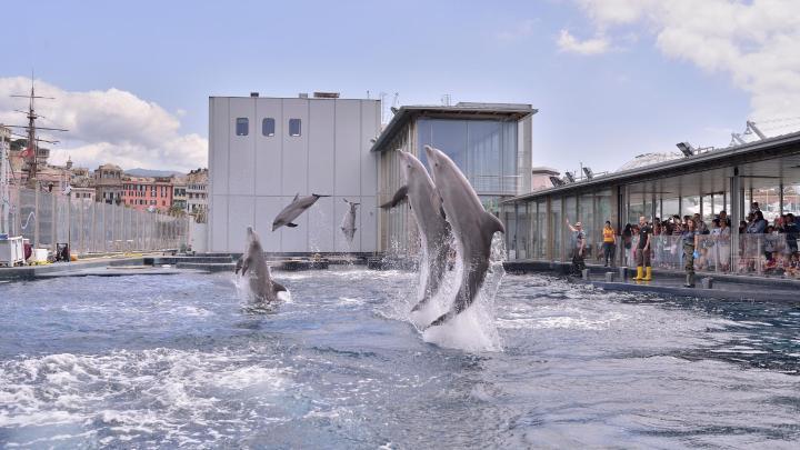 Encuentra el mejor lugar para los acuarios en Génova