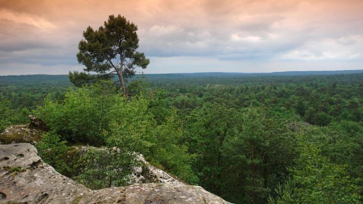 Encuentra el mejor lugar para el bosque en Fontainebleau