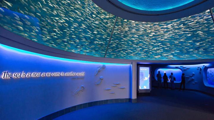 Encuentra el mejor lugar para los acuarios en Monterey