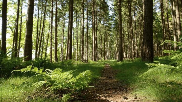 Encuentra el mejor lugar para el bosque en Cariló