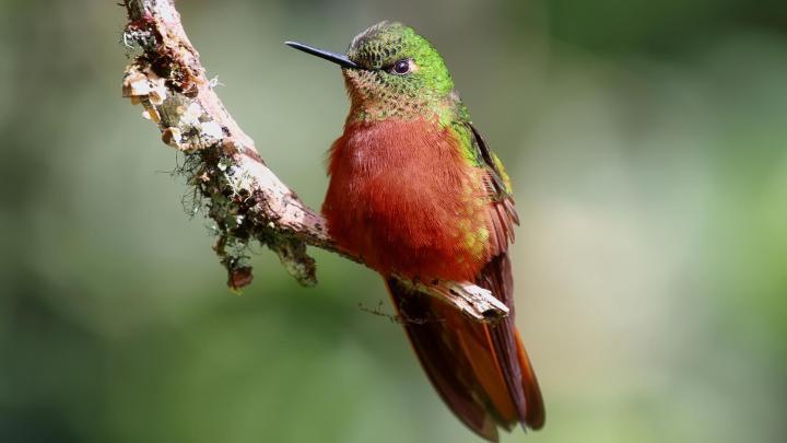 Encuentra el mejor lugar para observar aves en Mindo