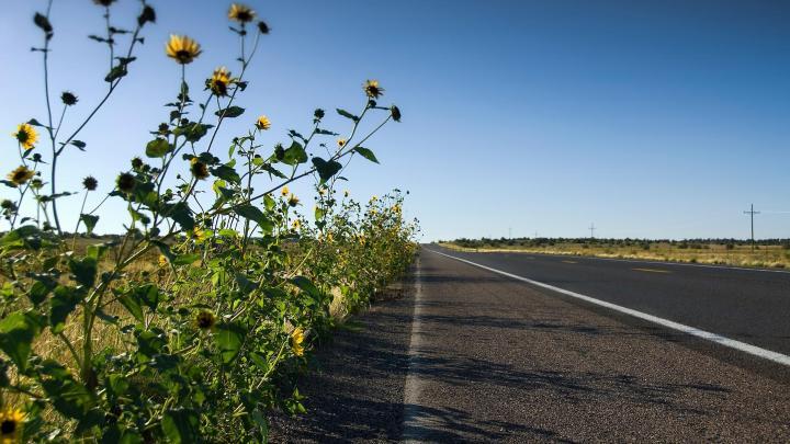 Encuentra el mejor lugar para la Ruta 66 en Seligman