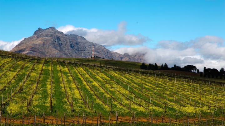 Encuentra el mejor lugar para los viñedos en Stellenbosch