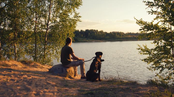 Encuentra el mejor lugar para viajar con mascotas en Whitby