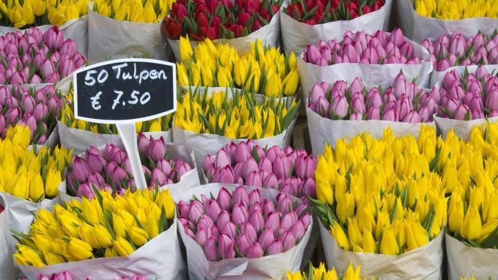 Encuentra el mejor lugar para la flores en Ámsterdam