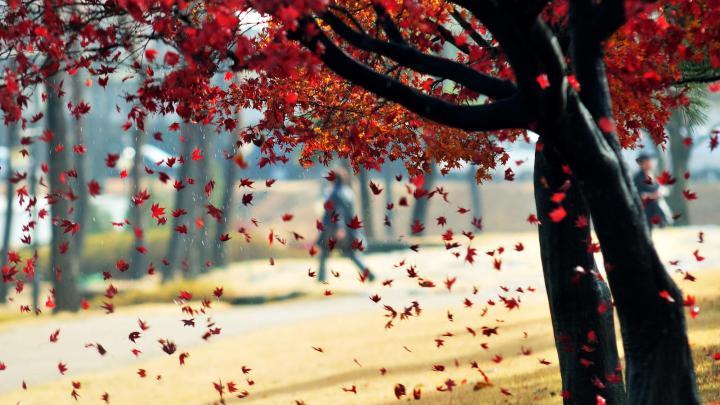 Encuentra el mejor lugar para los paisajes de otoño en Bright