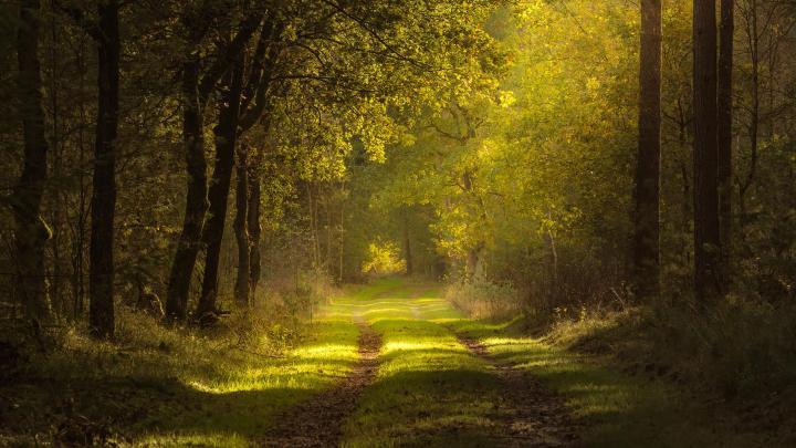 Encuentra el mejor lugar para los bosques bonitos en Epe