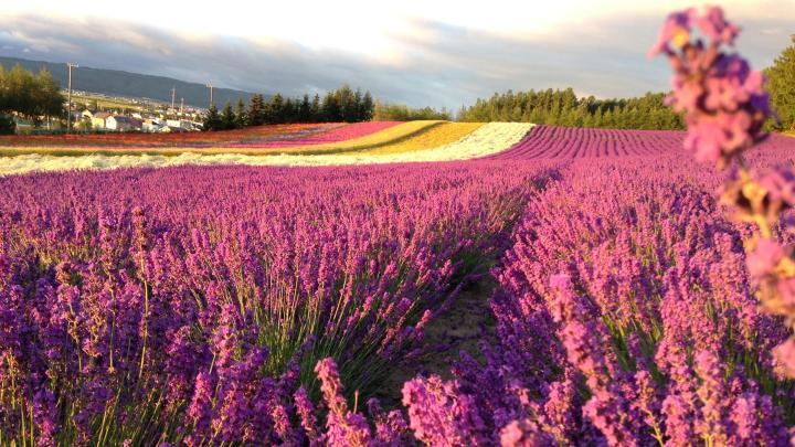 Encuentra el mejor lugar para la flores en Furano