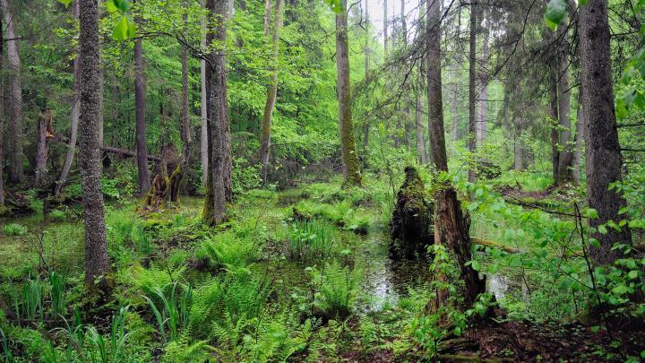 Encuentra el mejor lugar para el bosque en Białowieża