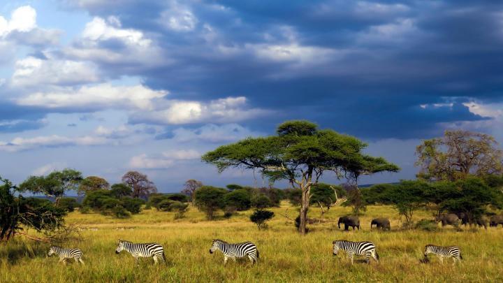 Encuentra el mejor lugar para los safaris en Arusha