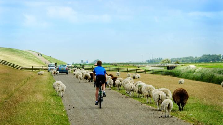Encuentra el mejor lugar para el ciclismo en West-Terschelling