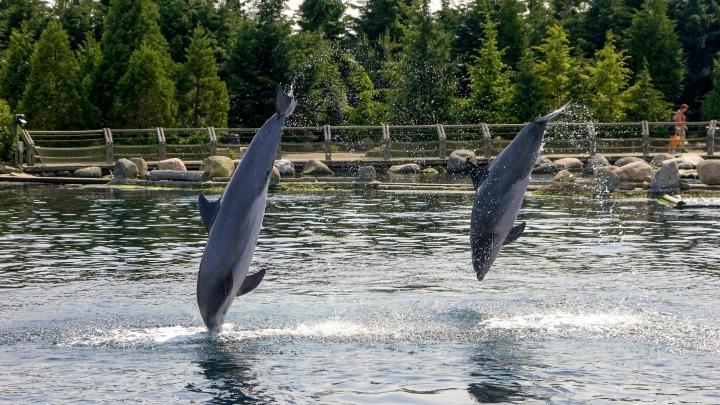 Encuentra el mejor lugar para ver delfines en Harderwijk