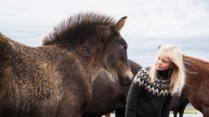 Encuentra el mejor lugar para montar a caballo en Varmahlid
