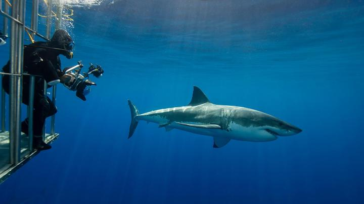 Encuentra el mejor lugar para bucear con tiburones en Port Lincoln