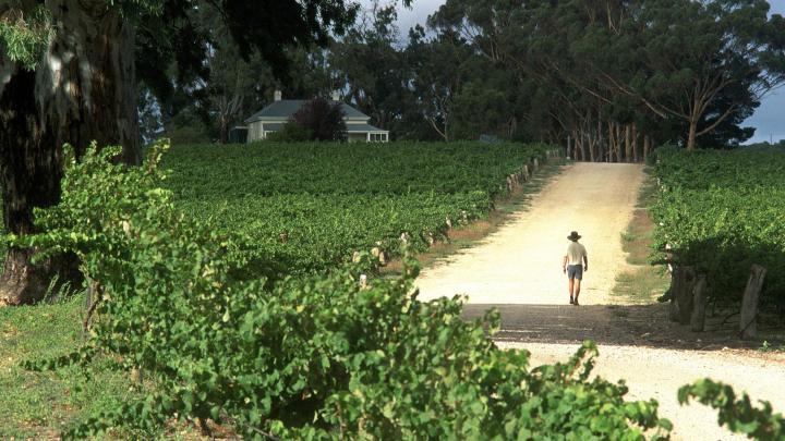 Encuentra el mejor lugar para el vino en Pokolbin