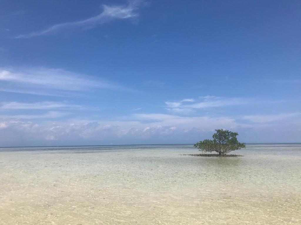 Panglao Island Inn - Alona Beach