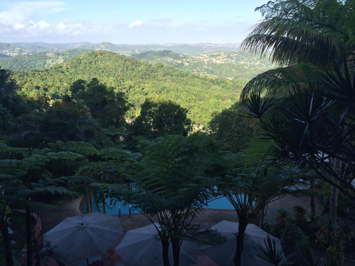 best guest house in the rain forest | review of el escondido guest