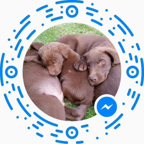 Gîte Labradors de Bailly- Giverny