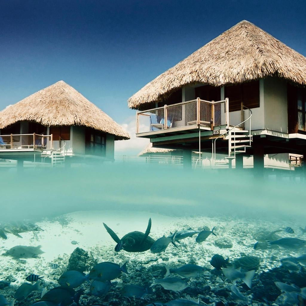 Le Méridien Bora Bora's private lagoon is the site of a turtle care centre
