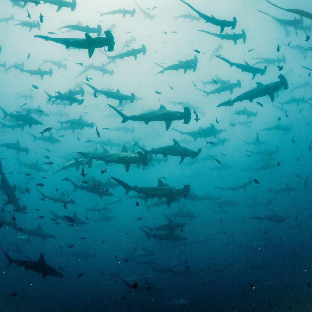 Keep your eyes peeled for great white, hammerhead, and bronze whaler sharks