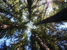 Riverside Campground & Cabins, Big Sur
