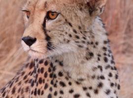 Aloegrove Safari Lodge, Otjiwarongo