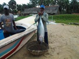 Dolphinchilling, Alankuda