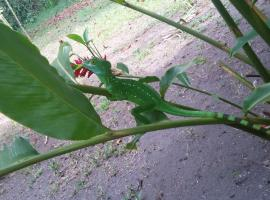Green Gold Ecolodge, Jaloba