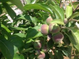 Meyveli Ev Pension, Fethiye