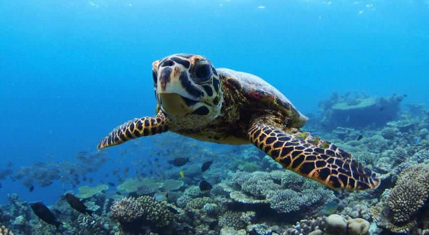 Остров Баа на Мальдивах выбирают за возможность провести отдых дорого