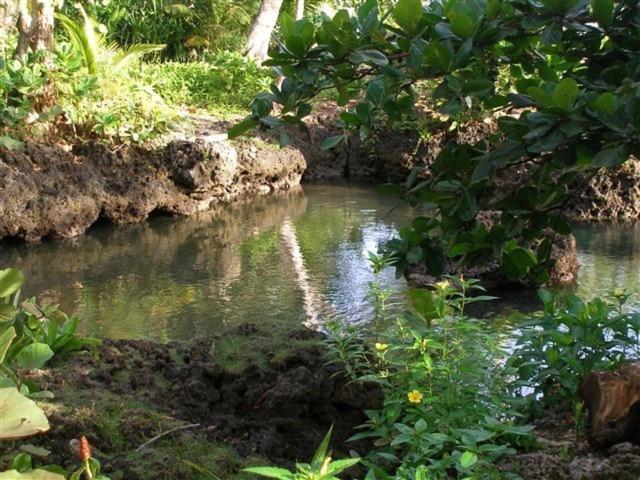 Piscina Natural On The Sea Cahuita Precios Actualizados