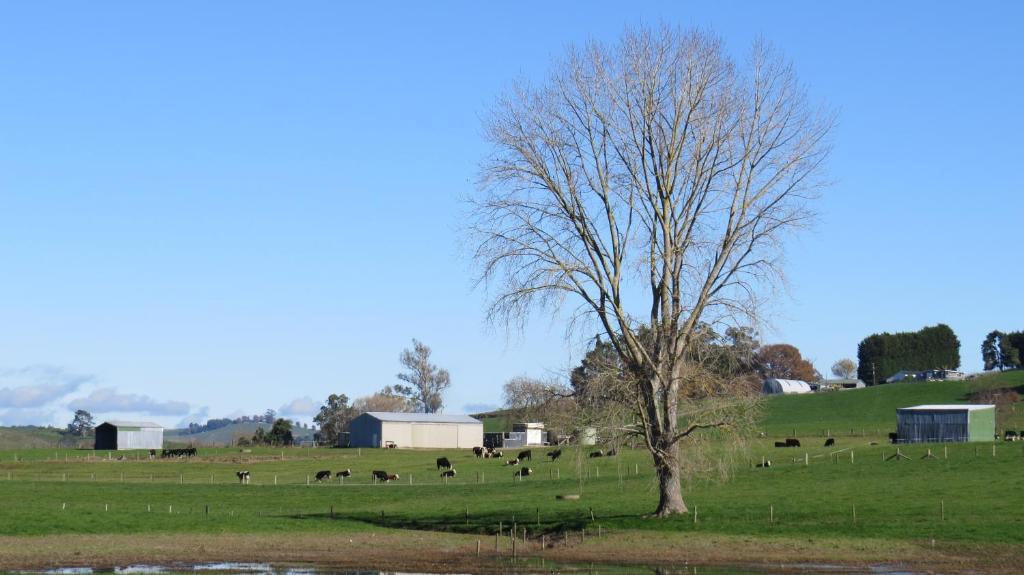 Buckland bnb matamata u2013 2018 legfrissebb árai