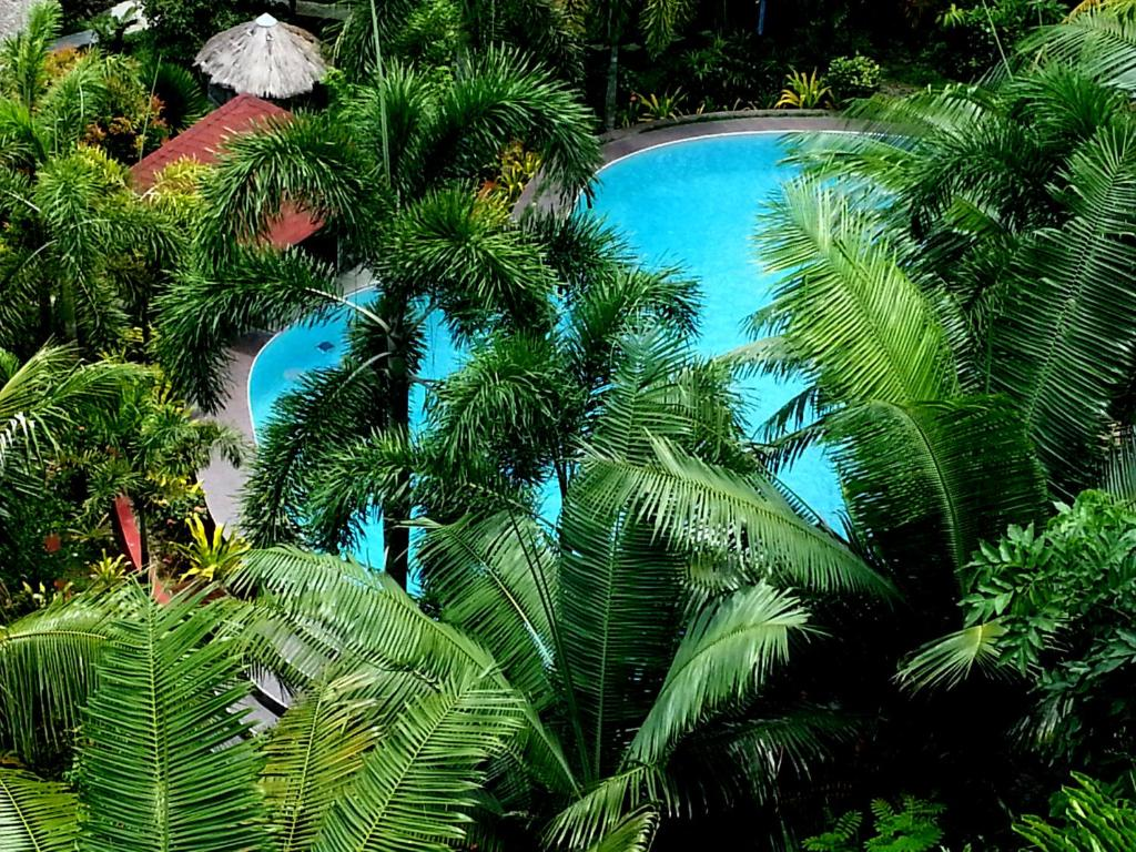 A view of the pool at Hof Gorei Beach Resort Davao or nearby