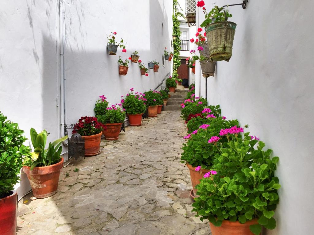 boutique hotels in vejer de la frontera  19