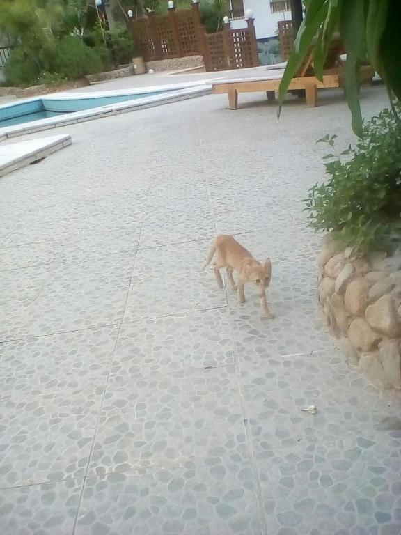 Residenz Suleder 1 (Ägypten Hurghada) - Booking.com